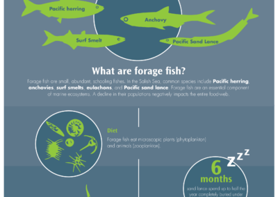 Forage Fish infographic